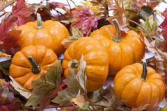 Pumpkins with fall leaves Royalty Free Stock Photo