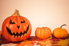 Pumpkins on Fall Leaves Stock Images