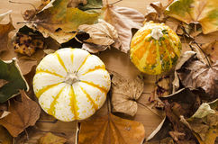Pumpkins and fall leaves Royalty Free Stock Photography