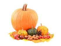 Pumpkins and fall leaves. Stock Images