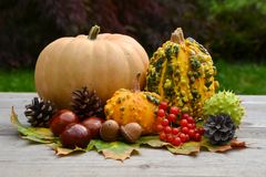 Pumpkins and fall leaves. Stock Photos