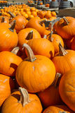 Pumpkins in the Fall Royalty Free Stock Photos