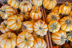 Pumpkins in the Fall Stock Photos