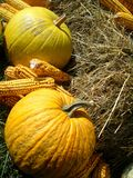 Pumpkins in fall surround Royalty Free Stock Images