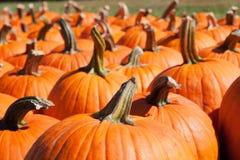Pumpkins at farm Stock Photo