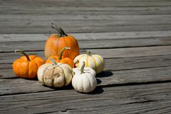Pumpkins on the dock. Pumpkins in the farm comes in different color and size. White small one to orange medium size royalty free stock photo