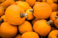Pumpkins from farm after harvest Autumn Halloween royalty free stock image