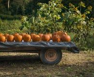 Pumpkins on a Farm Wagon Stock Photo