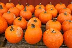 Pumpkins at the farmer market. Royalty Free Stock Photo