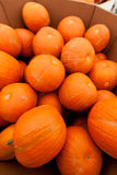 Pumpkins at the farmer market. Stock Photography