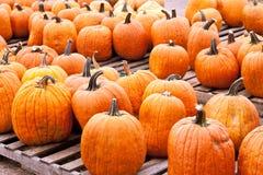 Pumpkins Farmers Market Stock Image