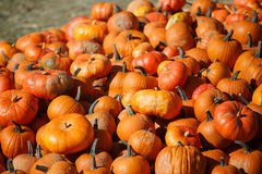 Pumpkins at the Farmers market. Stock Images