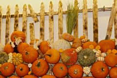 Pumpkins fence Royalty Free Stock Photo