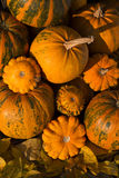 Pumpkins on a field. In the countryside Stock Photography