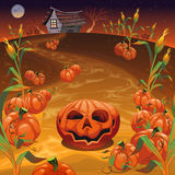 Pumpkins in the field. Funny cartoon and  Halloween illustration Stock Photo