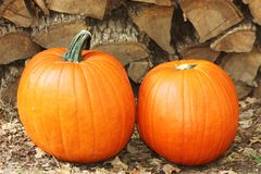 Pumpkins and Firewood. Two big fat orange pumpkins sitting on the ground in front of stacked firewood stock images