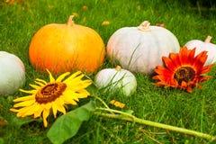 Pumpkins and fllowers on grass Stock Photos