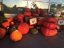 Pumpkins in a market Royalty Free Stock Image
