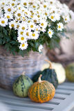 Pumpkins and flowers Royalty Free Stock Image