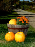 Pumpkins and flowers Stock Image