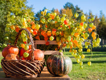 Pumpkins in a basket and autumn  flowers. Pumpkins in a basket  and autumn flowers behind them Stock Image