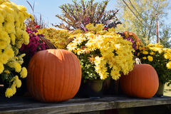 Pumpkins and Flowers. Pumpkins with bright yellow and purple flower display on a wooden surface Royalty Free Stock Photo