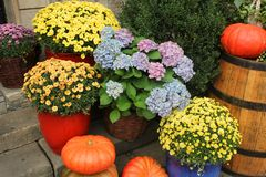 Pumpkins and flowers composition Royalty Free Stock Photos