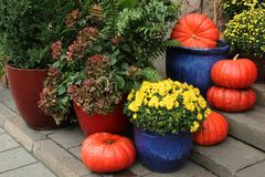 Pumpkins and flowers composition Royalty Free Stock Images