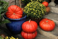 Pumpkins and flowers composition Stock Photo