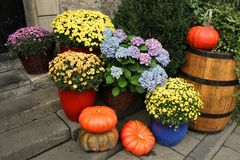 Pumpkins and flowers composition Stock Images
