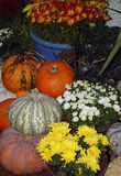Pumpkins and flowers,Still Life Royalty Free Stock Images