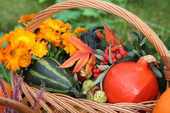 Pumpkins, flowers. Wicker basket with decorative pumpkins and colorful flowers Stock Images