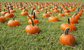 Free Pumpkins For Sale Royalty Free Stock Photography - 26918577