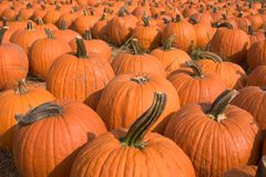 Pumpkins For Sale 5 Royalty Free Stock Images