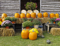 Pumpkins For Sale At Roadside Market Royalty Free Stock Photo