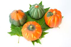 Pumpkins about four green leaf Stock Image