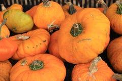 Pumpkins Stock Photography
