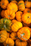 Pumpkins fresh picked from the patch Royalty Free Stock Photography