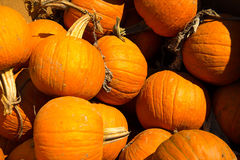 Pumpkins fresh picked from the patch Royalty Free Stock Photo
