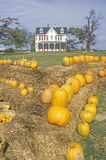 Pumpkins in Front of a House, Maryland Stock Image