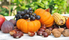 Pumpkins and fruits Stock Images