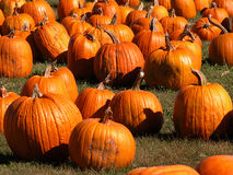 Pumpkins galore Stock Photo