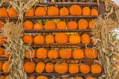 Pumpkins Galore Stock Photos