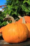 Pumpkins in the garden, close up shot Stock Photo