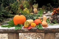 Pumpkins in garden. Stock Photography