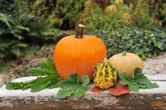 Pumpkins in garden. Stock Images