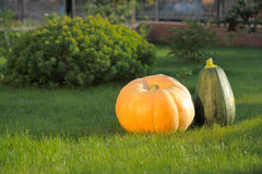 Pumpkins in garden Royalty Free Stock Images
