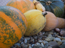 Pumpkins in the garden. Halloween mood in the autumn garden Royalty Free Stock Photography