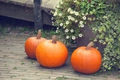 Pumpkins in the garden. stock photo