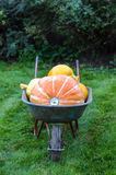 Pumpkins in garden trolley Royalty Free Stock Images